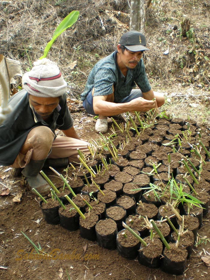 We Also Provide Bamboo Nursery And Clump Management The Purpose Of This Training Is That Farmers Can Produce Better Quality
